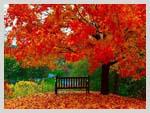 Осенне одиночество